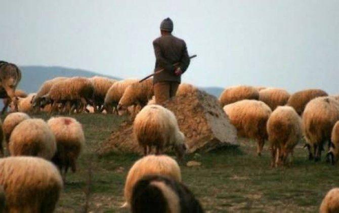 Axmaq mikrobla çobanın əhvalatı...