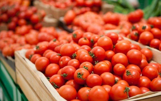 Azərbaycanın 89 müəssisəsinə Rusiyaya pomidor ixrac etməsinə icazə verilib